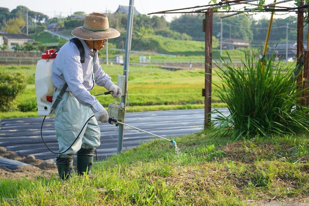 緑地の除草