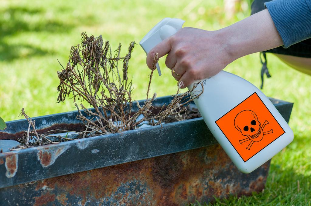 殺虫剤の安全性