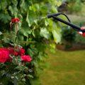 花を害虫から守るために薬剤を散布