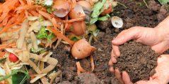 有機肥料と化成肥料の違い:メリットとデメリットまとめ